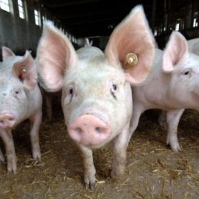 Plus de porc à la protection civile, par respect pour lesmusulmans